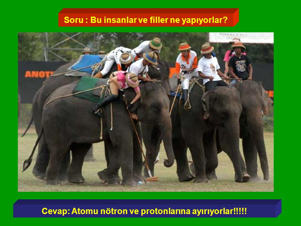 Soru : Bu insanlar ve filler ne yapıyorlar