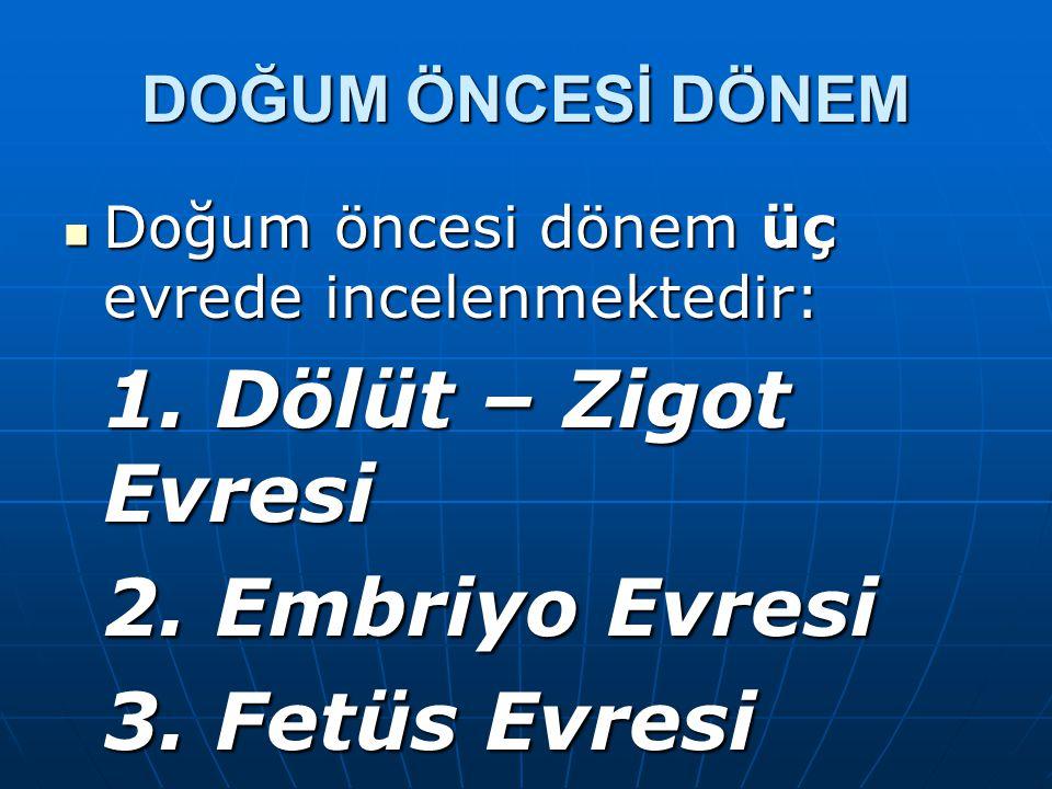 1. Dölüt – Zigot Evresi 2. Embriyo Evresi 3. Fetüs Evresi
