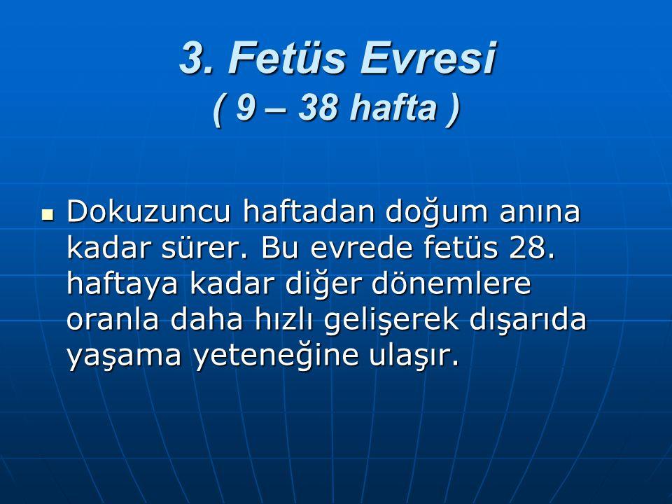 3. Fetüs Evresi ( 9 – 38 hafta )