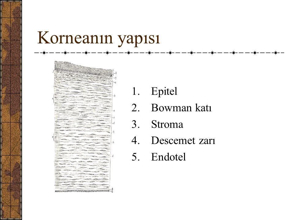 Korneanın yapısı Epitel Bowman katı Stroma Descemet zarı Endotel