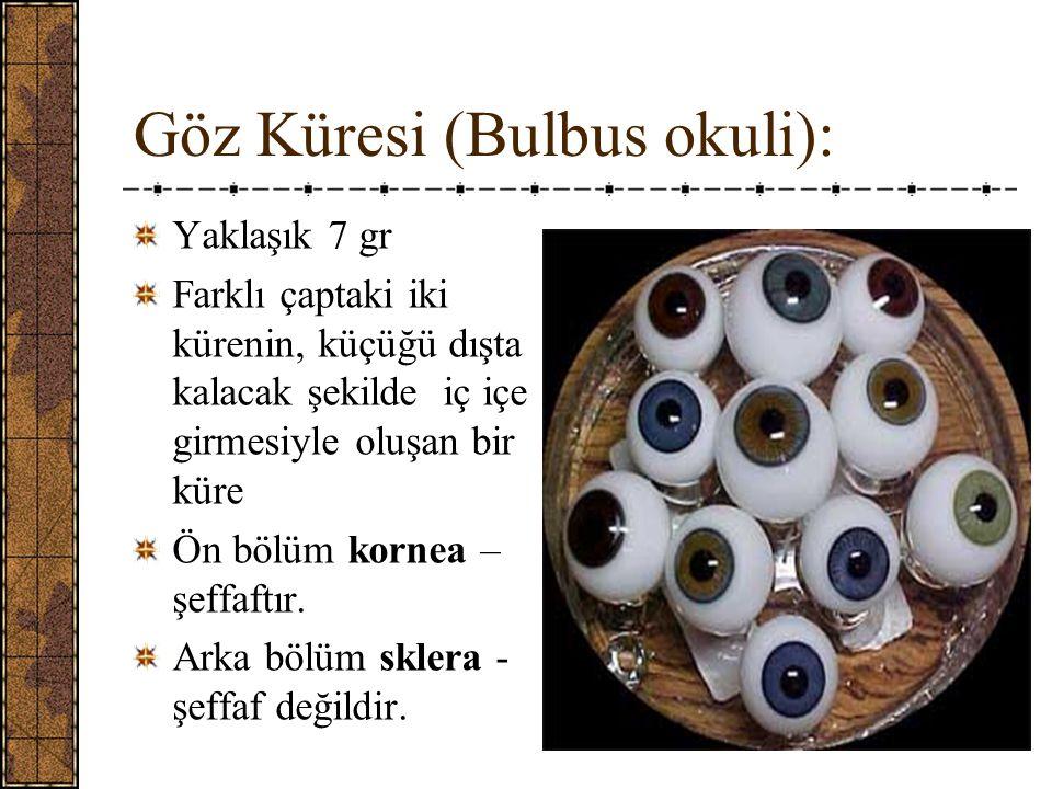 Göz Küresi (Bulbus okuli):