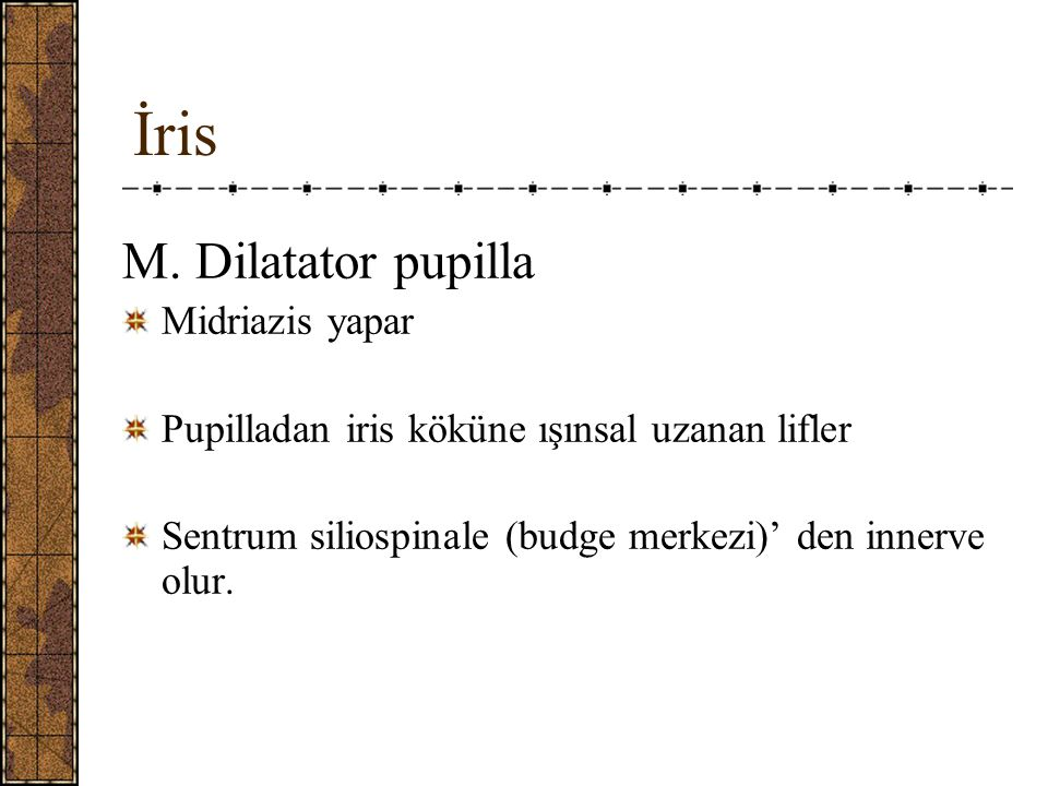 İris M. Dilatator pupilla Midriazis yapar