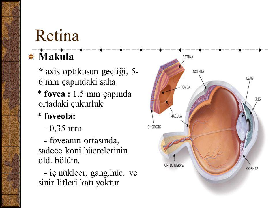 Retina Makula * axis optikusun geçtiği, 5-6 mm çapındaki saha