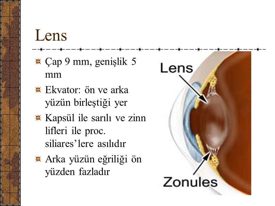 Lens Çap 9 mm, genişlik 5 mm Ekvator: ön ve arka yüzün birleştiği yer