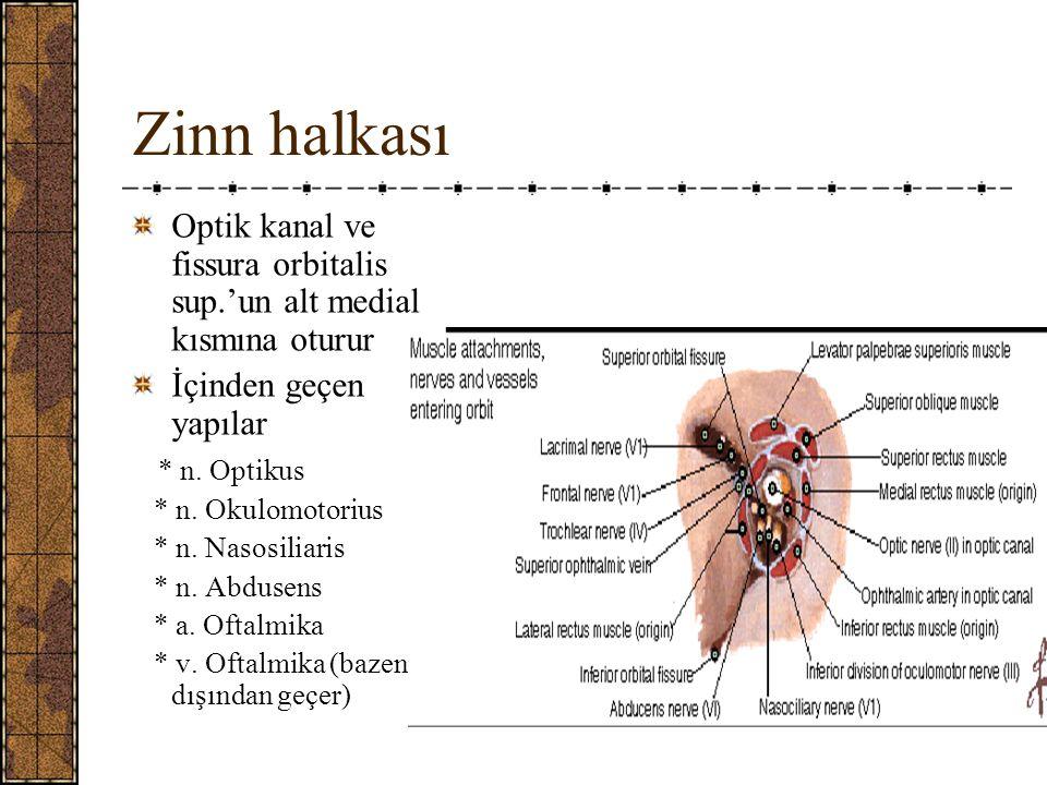 Zinn halkası Optik kanal ve fissura orbitalis sup.'un alt medial kısmına oturur. İçinden geçen yapılar.