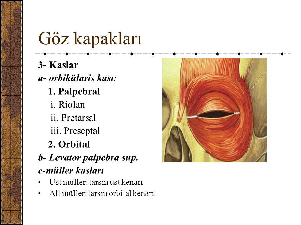 Göz kapakları 3- Kaslar a- orbikülaris kası: 1. Palpebral i. Riolan