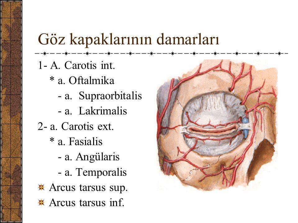 Göz kapaklarının damarları