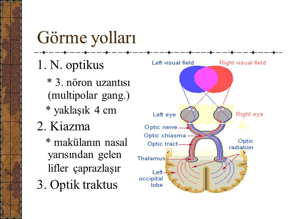 Görme yolları 1. N. optikus * 3. nöron uzantısı (multipolar gang.)
