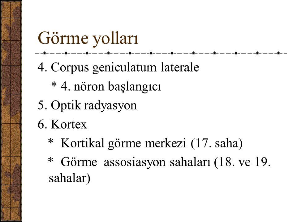Görme yolları 4. Corpus geniculatum laterale * 4. nöron başlangıcı