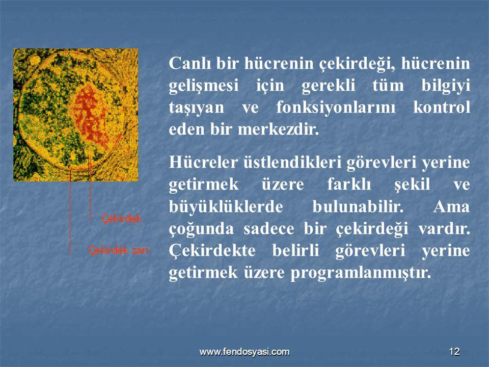 Canlı bir hücrenin çekirdeği, hücrenin gelişmesi için gerekli tüm bilgiyi taşıyan ve fonksiyonlarını kontrol eden bir merkezdir.