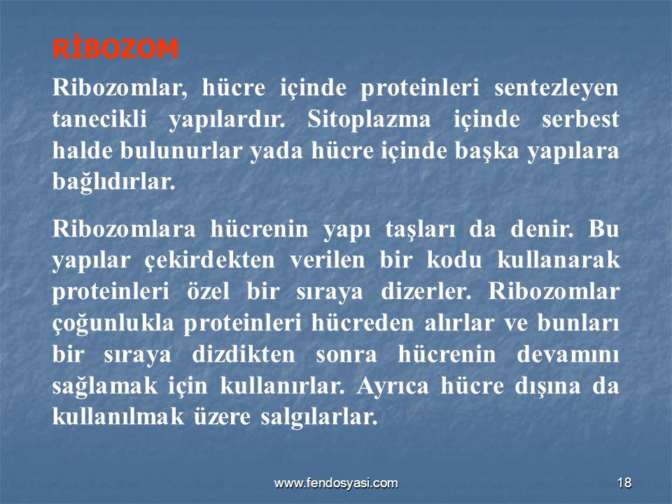 RİBOZOM