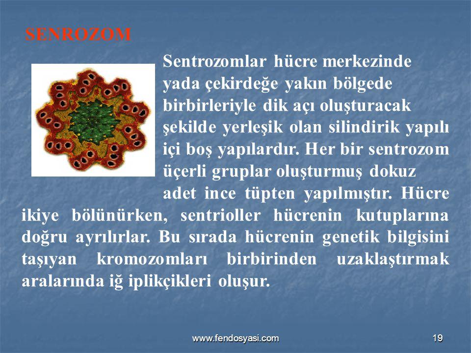 SENROZOM