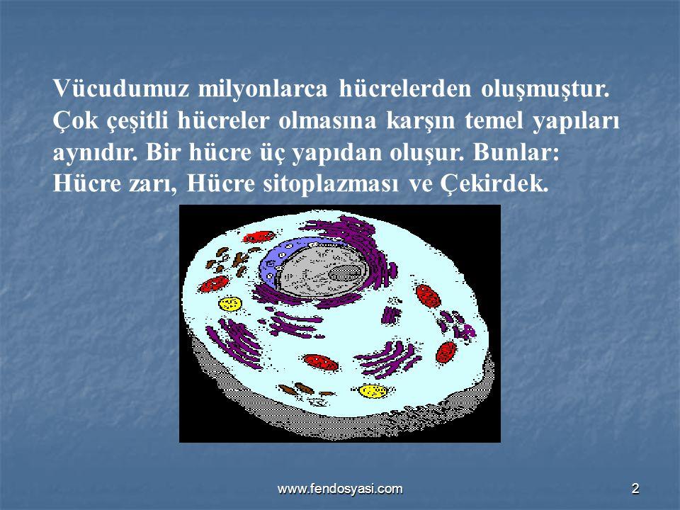 Vücudumuz milyonlarca hücrelerden oluşmuştur