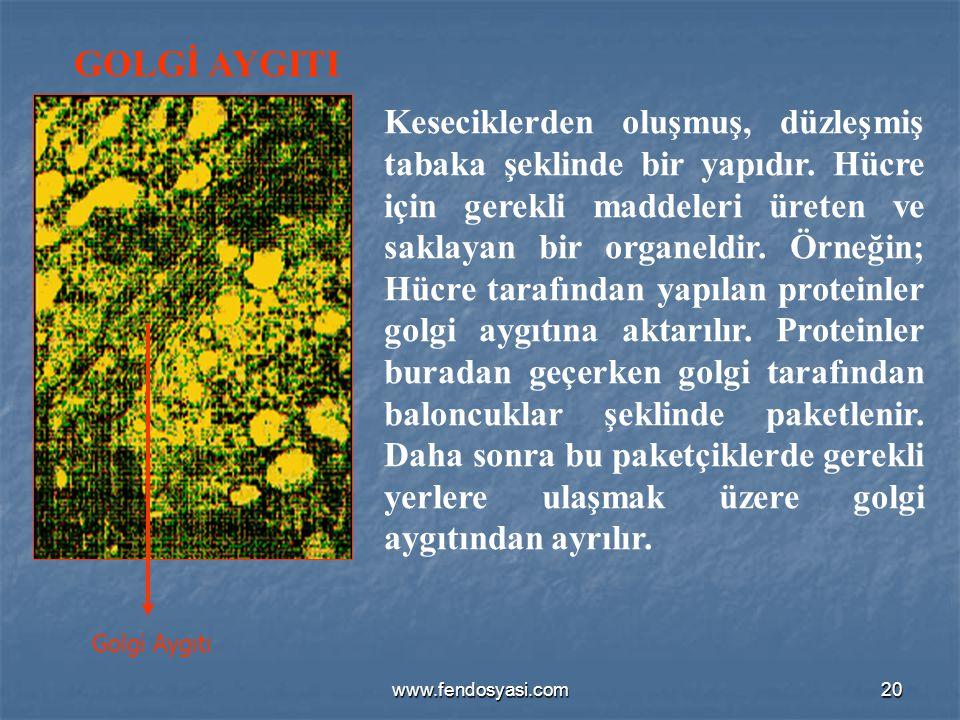 GOLGİ AYGITI Golgi Aygıtı.