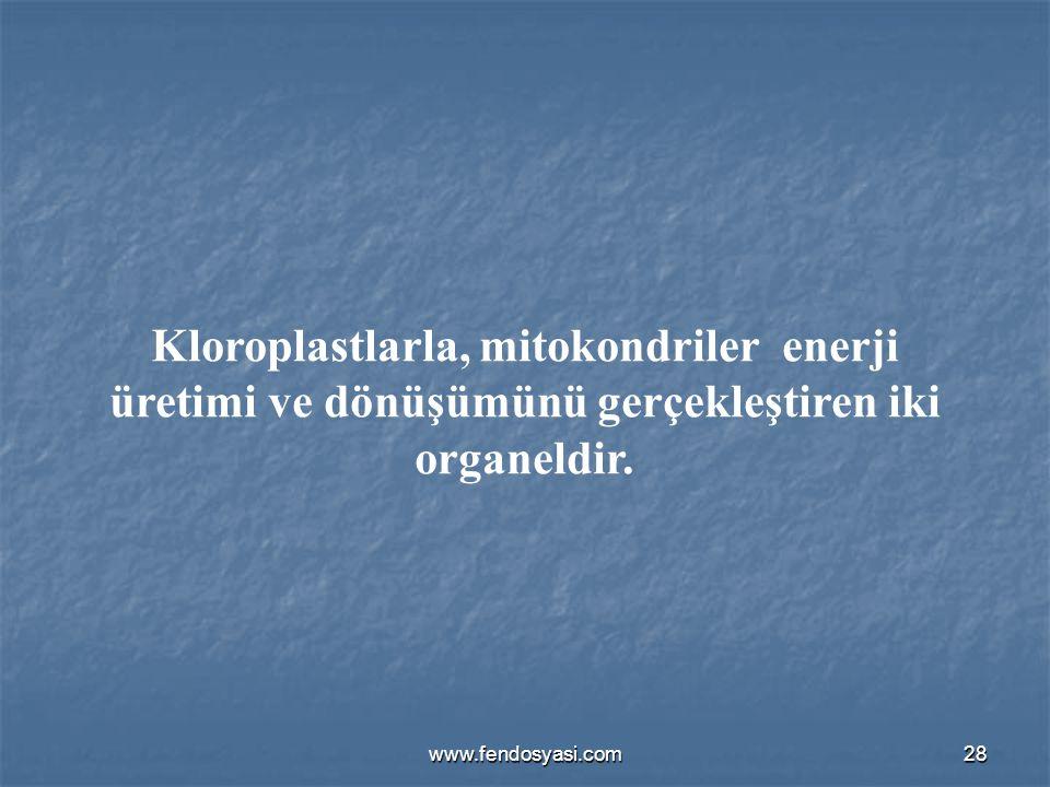 Kloroplastlarla, mitokondriler enerji üretimi ve dönüşümünü gerçekleştiren iki organeldir.
