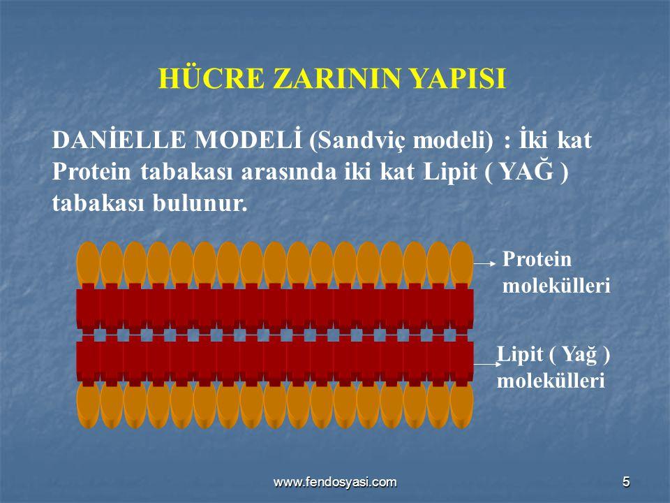 HÜCRE ZARININ YAPISI DANİELLE MODELİ (Sandviç modeli) : İki kat Protein tabakası arasında iki kat Lipit ( YAĞ ) tabakası bulunur.