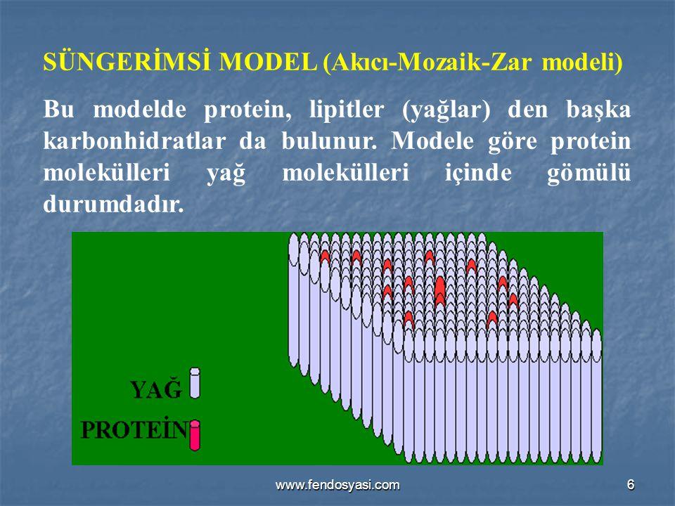 SÜNGERİMSİ MODEL (Akıcı-Mozaik-Zar modeli)