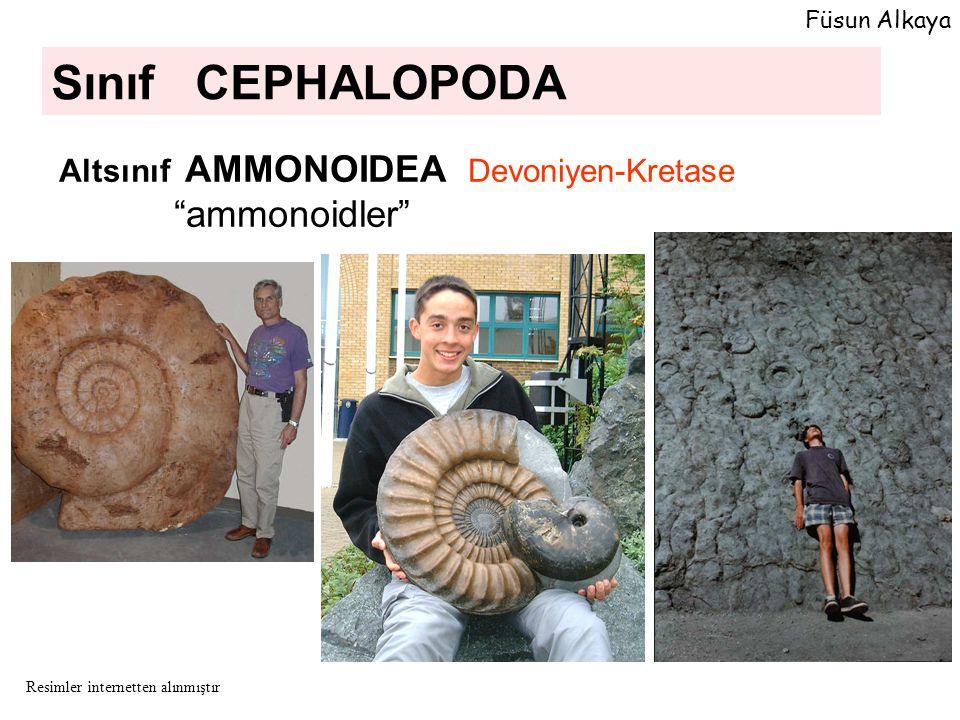 Sınıf CEPHALOPODA Altsınıf AMMONOIDEA Devoniyen-Kretase ammonoidler