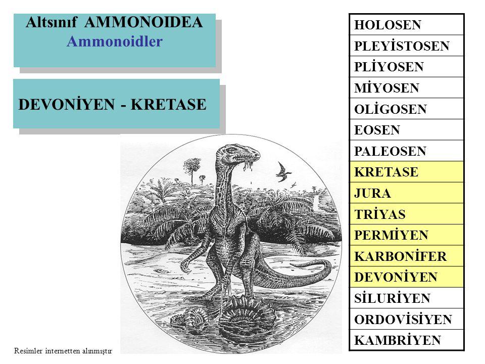 Altsınıf AMMONOIDEA Ammonoidler