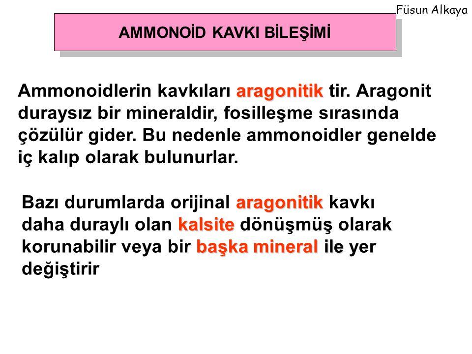 AMMONOİD KAVKI BİLEŞİMİ