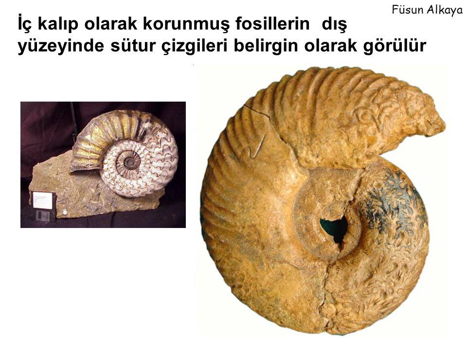 Füsun Alkaya İç kalıp olarak korunmuş fosillerin dış yüzeyinde sütur çizgileri belirgin olarak görülür.