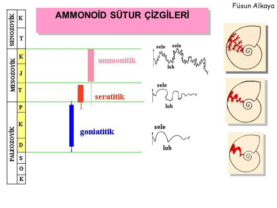 AMMONOİD SÜTUR ÇİZGİLERİ