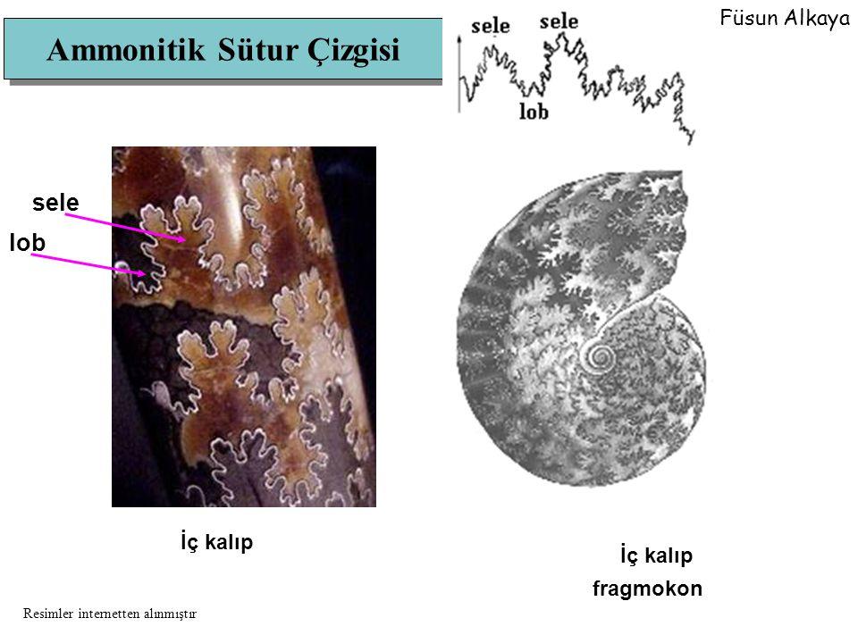 Ammonitik Sütur Çizgisi