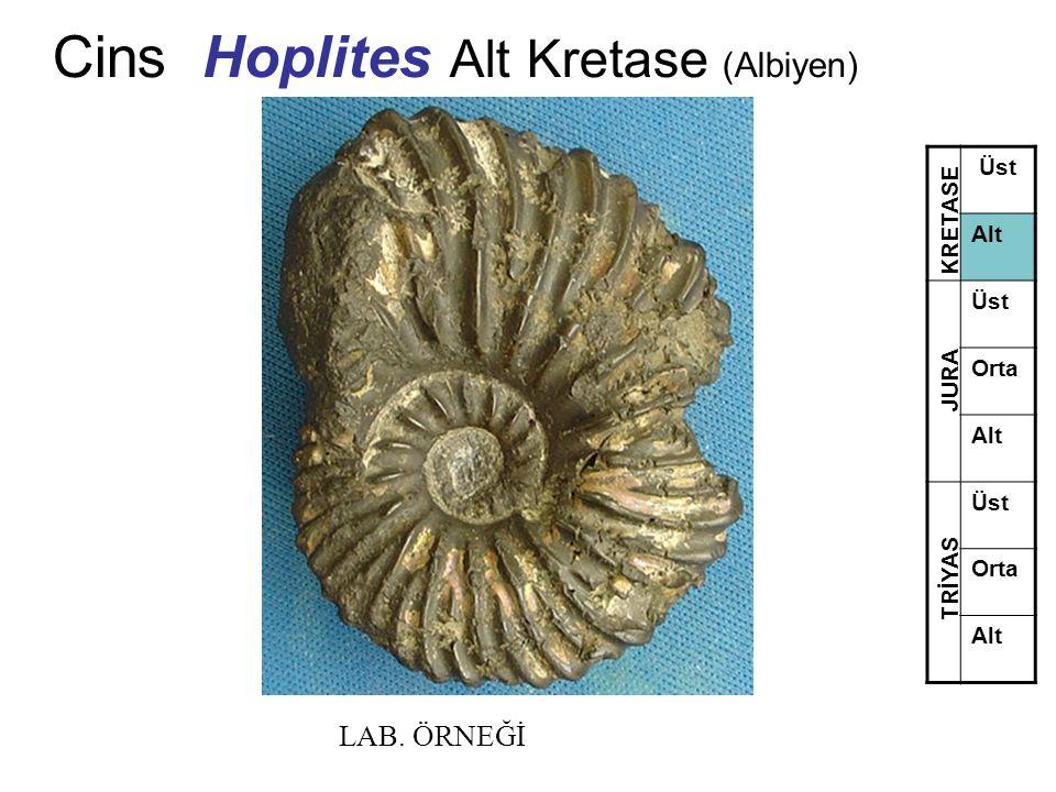 Cins Hoplites Alt Kretase (Albiyen)
