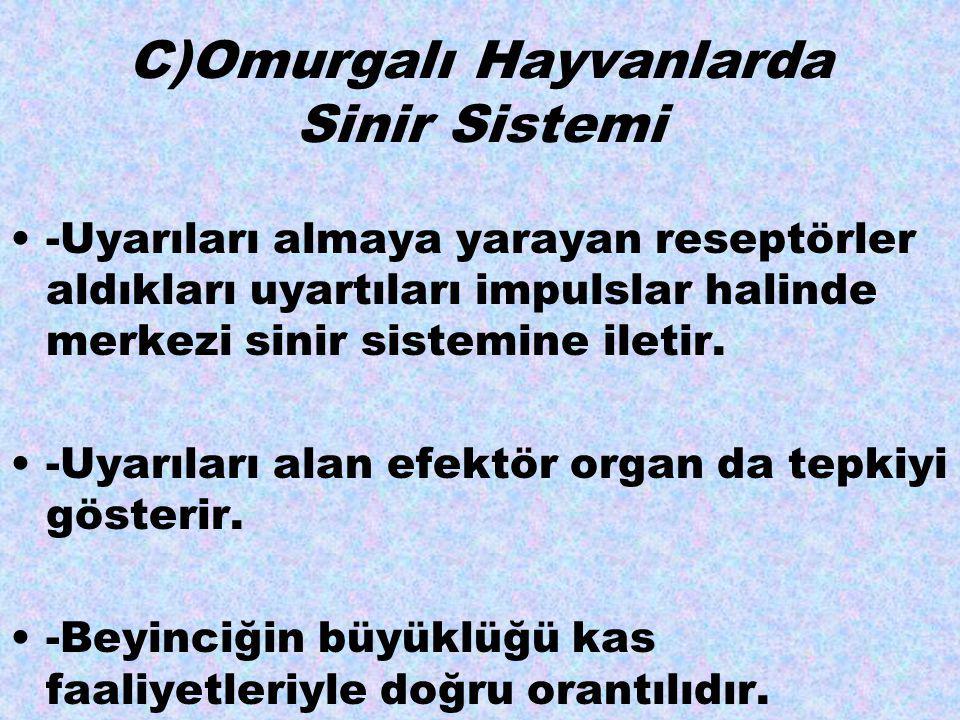 C)Omurgalı Hayvanlarda Sinir Sistemi