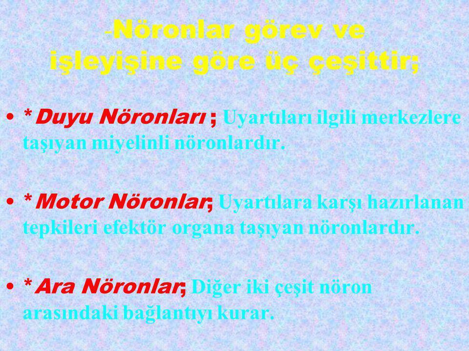 -Nöronlar görev ve işleyişine göre üç çeşittir;