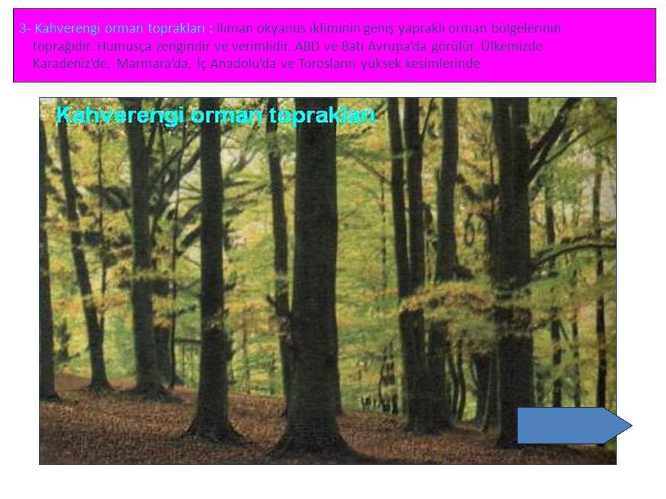 3- Kahverengi orman toprakları : Ilıman okyanus ikliminin geniş yapraklı orman bölgelerinin