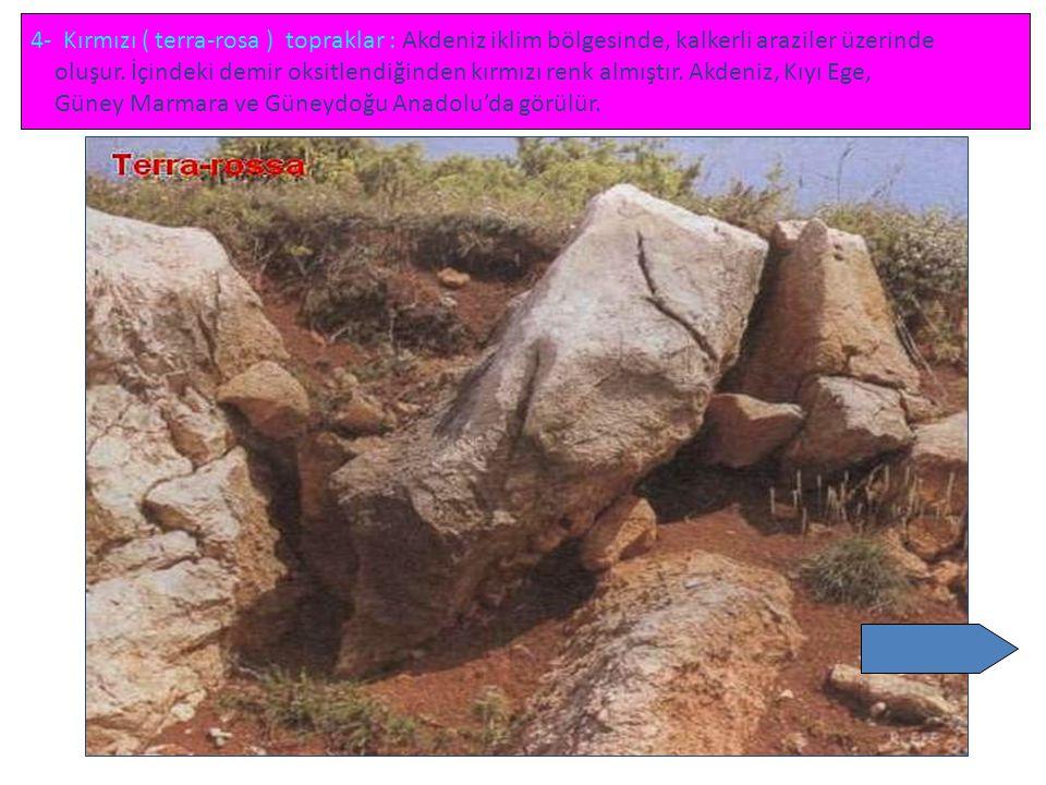 4- Kırmızı ( terra-rosa ) topraklar : Akdeniz iklim bölgesinde, kalkerli araziler üzerinde