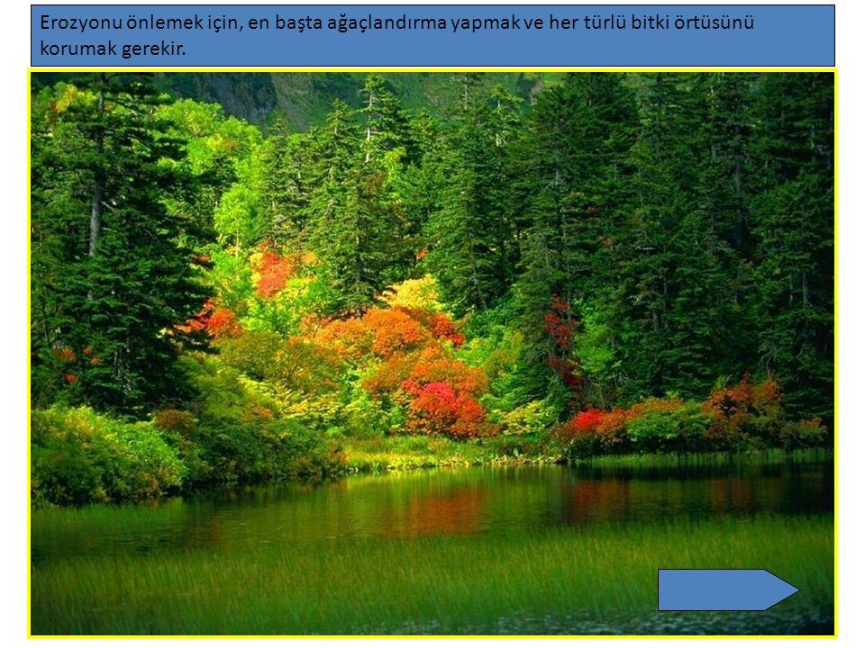 Erozyonu önlemek için, en başta ağaçlandırma yapmak ve her türlü bitki örtüsünü