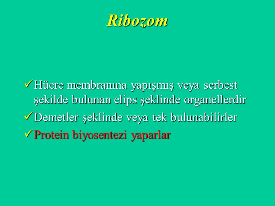 Ribozom Hücre membranına yapışmış veya serbest şekilde bulunan elips şeklinde organellerdir. Demetler şeklinde veya tek bulunabilirler.