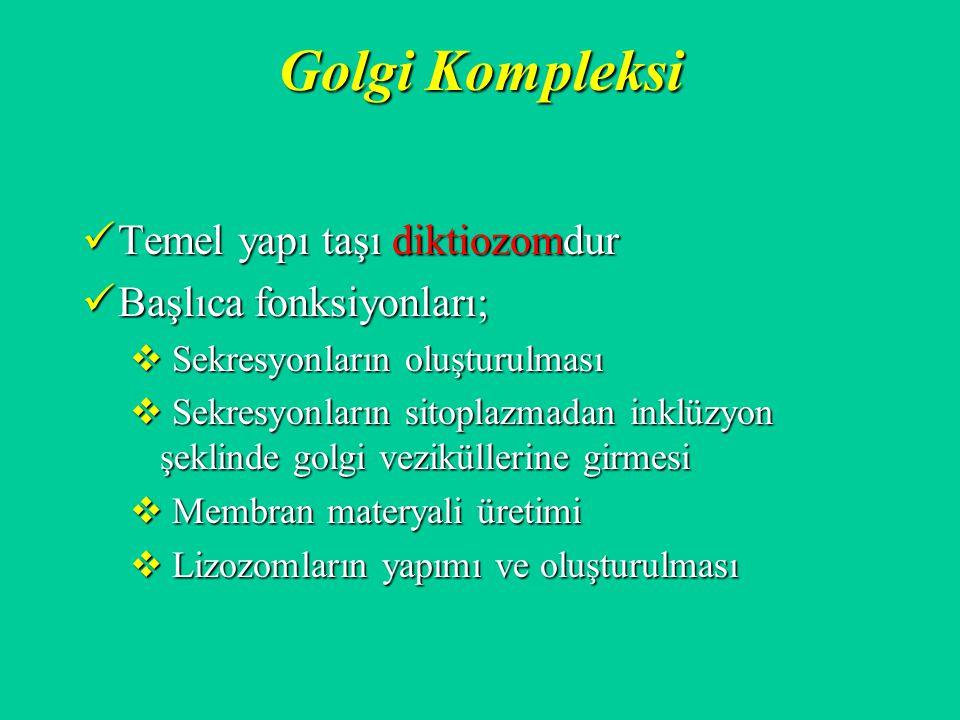 Golgi Kompleksi Temel yapı taşı diktiozomdur Başlıca fonksiyonları;