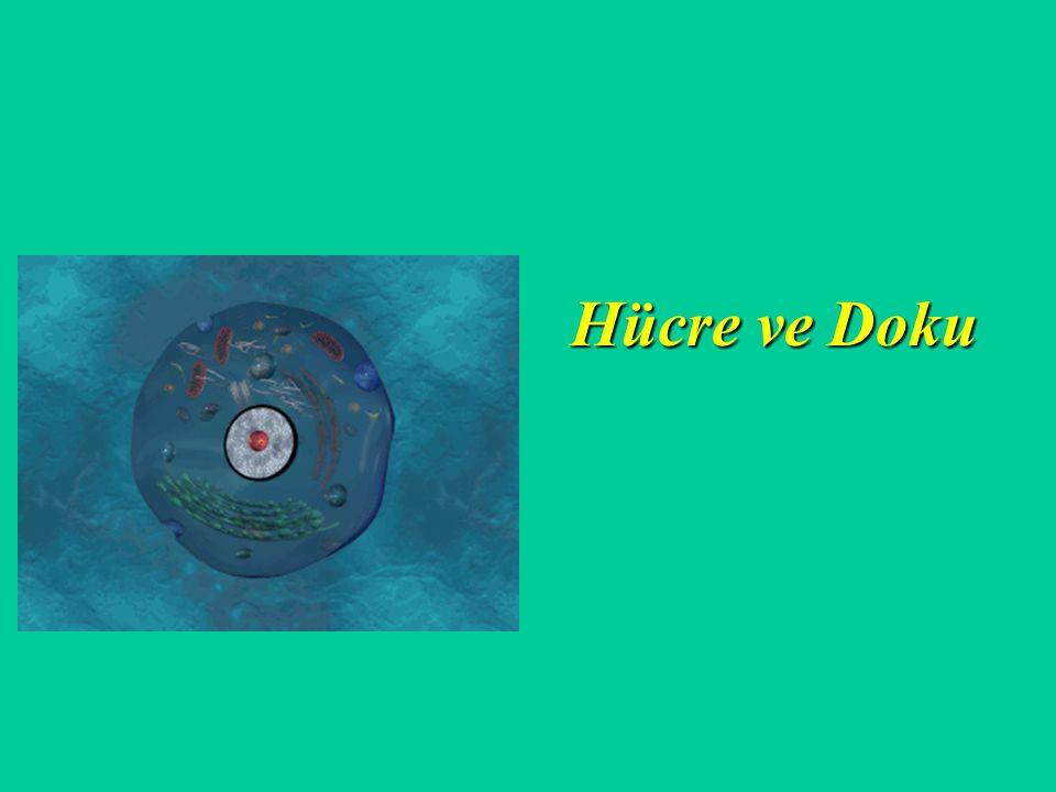 Hücre ve Doku