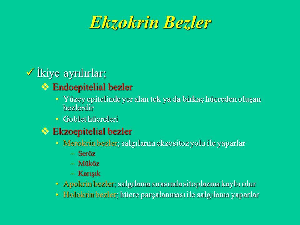 Ekzokrin Bezler İkiye ayrılırlar; Endoepitelial bezler