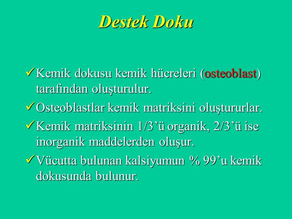 Destek Doku Kemik dokusu kemik hücreleri (osteoblast) tarafından oluşturulur. Osteoblastlar kemik matriksini oluştururlar.