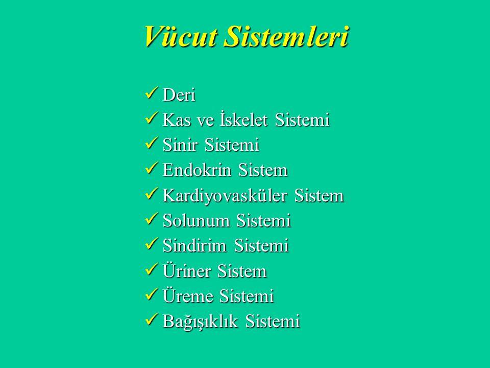 Vücut Sistemleri Deri Kas ve İskelet Sistemi Sinir Sistemi