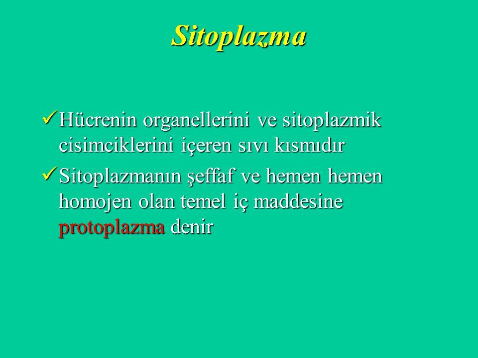 Sitoplazma Hücrenin organellerini ve sitoplazmik cisimciklerini içeren sıvı kısmıdır.
