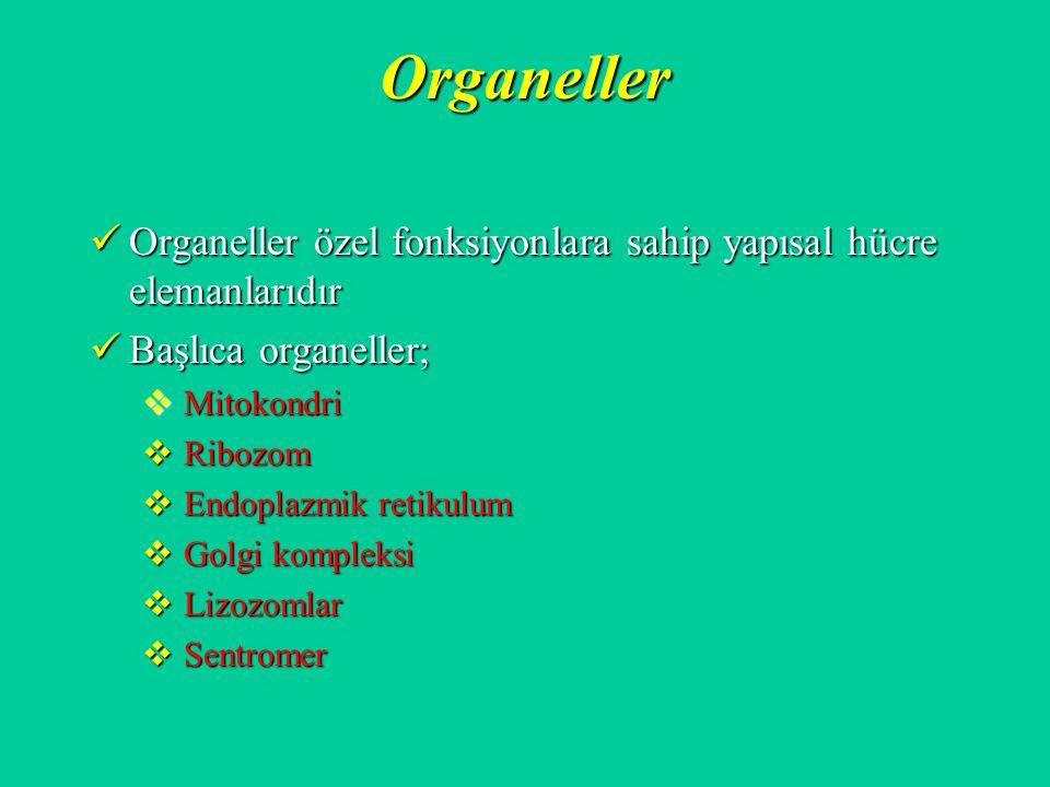 Organeller Organeller özel fonksiyonlara sahip yapısal hücre elemanlarıdır. Başlıca organeller; Mitokondri.