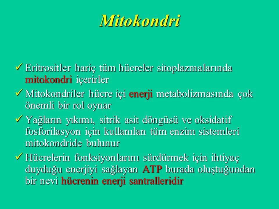 Mitokondri Eritrositler hariç tüm hücreler sitoplazmalarında mitokondri içerirler.