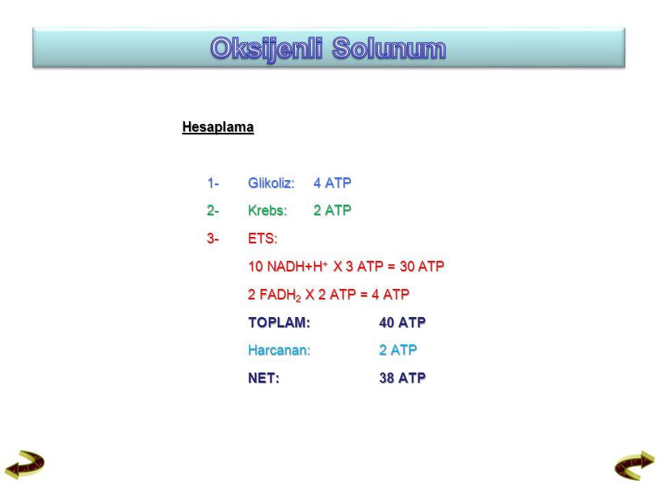 Oksijenli Solunum Hesaplama 1- Glikoliz: 4 ATP 2- Krebs: 2 ATP 3- ETS: