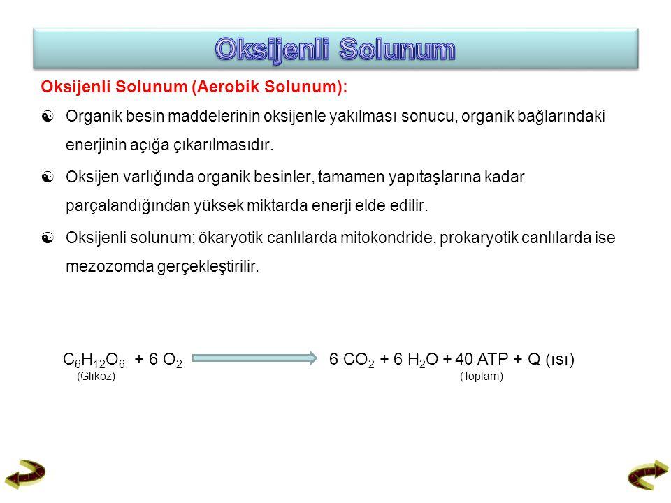 Oksijenli Solunum Oksijenli Solunum (Aerobik Solunum):