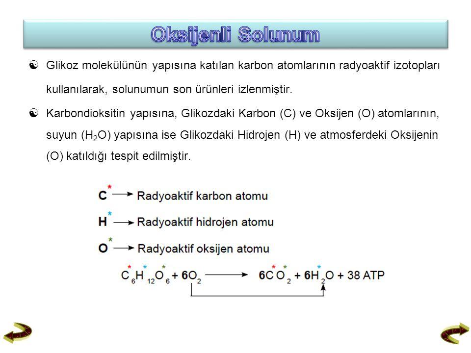Oksijenli Solunum