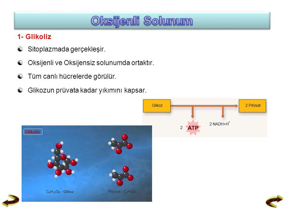 Oksijenli Solunum 1- Glikoliz  Sitoplazmada gerçekleşir.