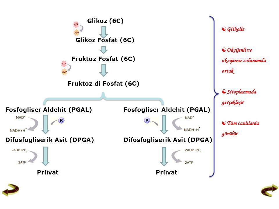 Glikoz Fosfat (6C) Glikoliz Glikoz (6C)