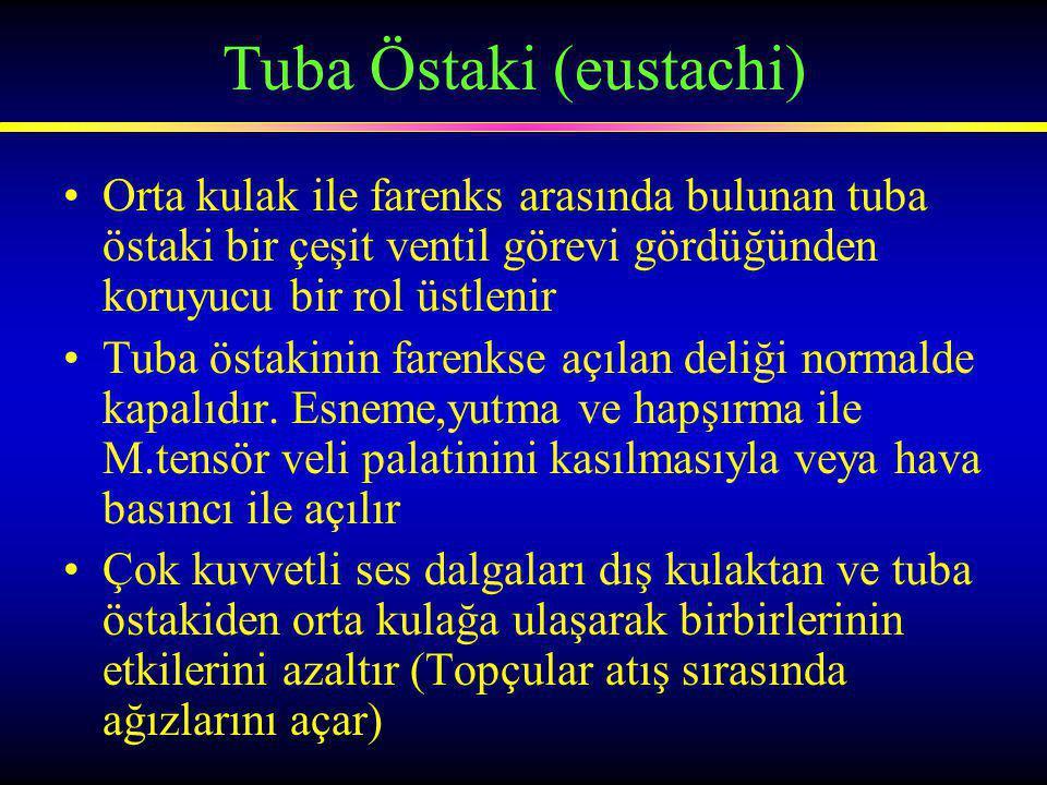 Tuba Östaki (eustachi)