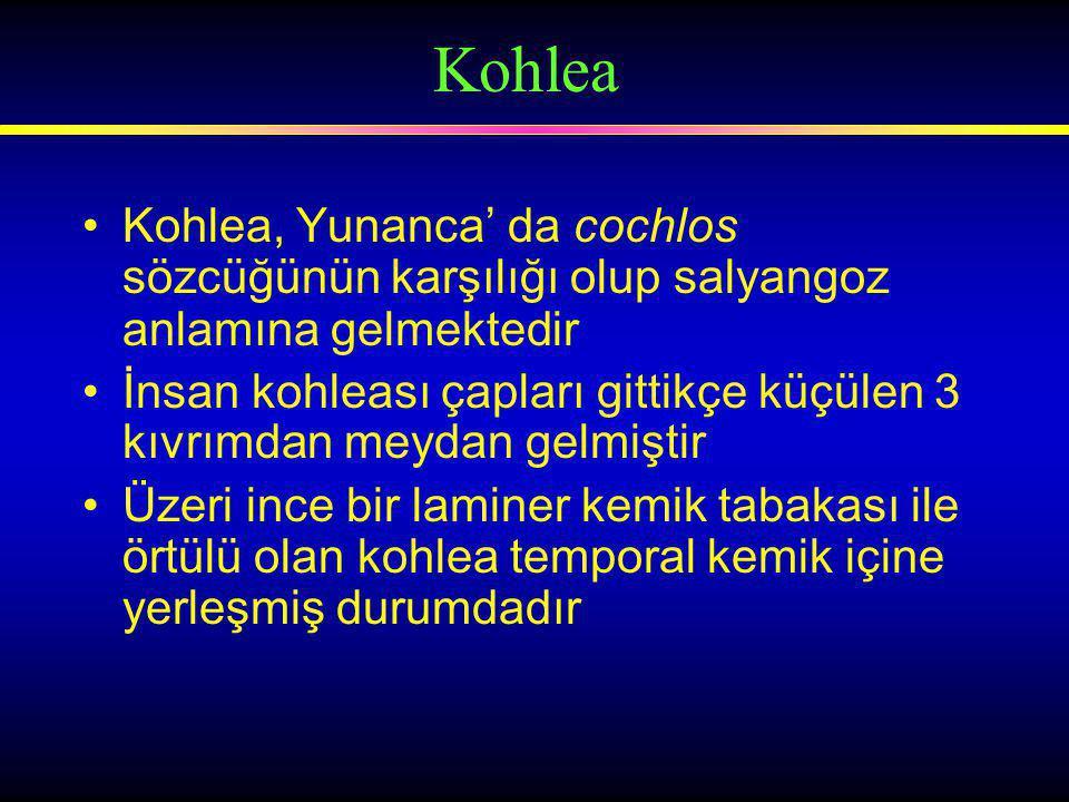 Kohlea Kohlea, Yunanca' da cochlos sözcüğünün karşılığı olup salyangoz anlamına gelmektedir.