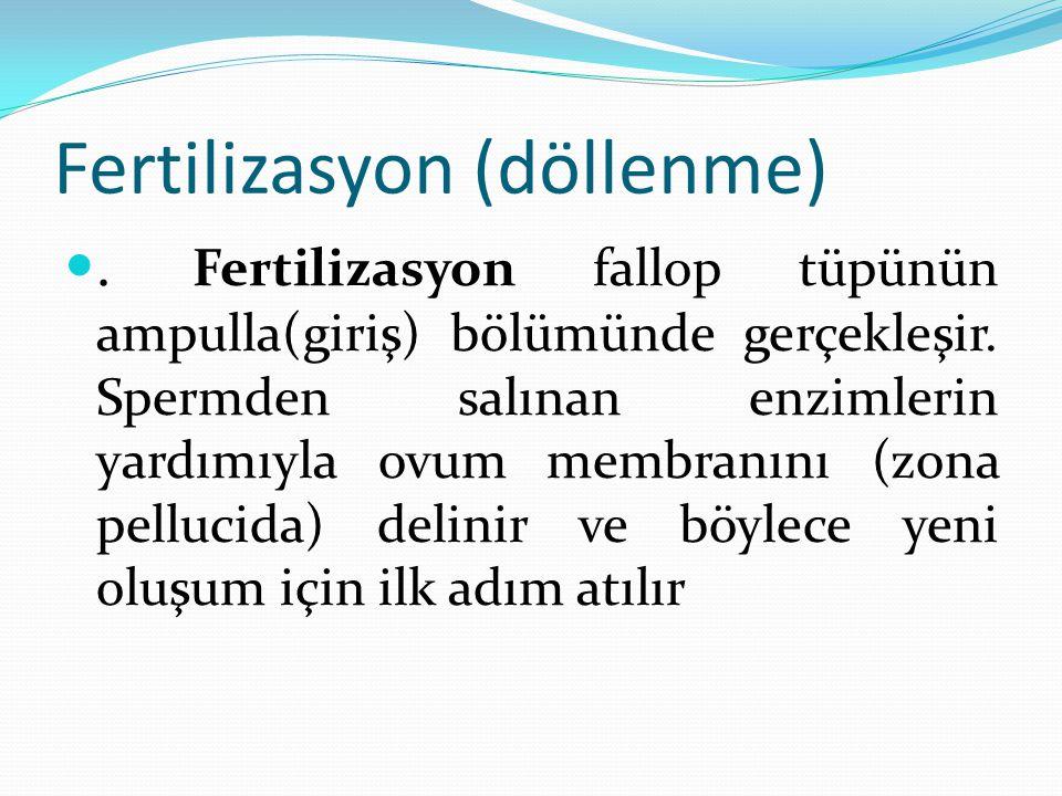 Fertilizasyon (döllenme)
